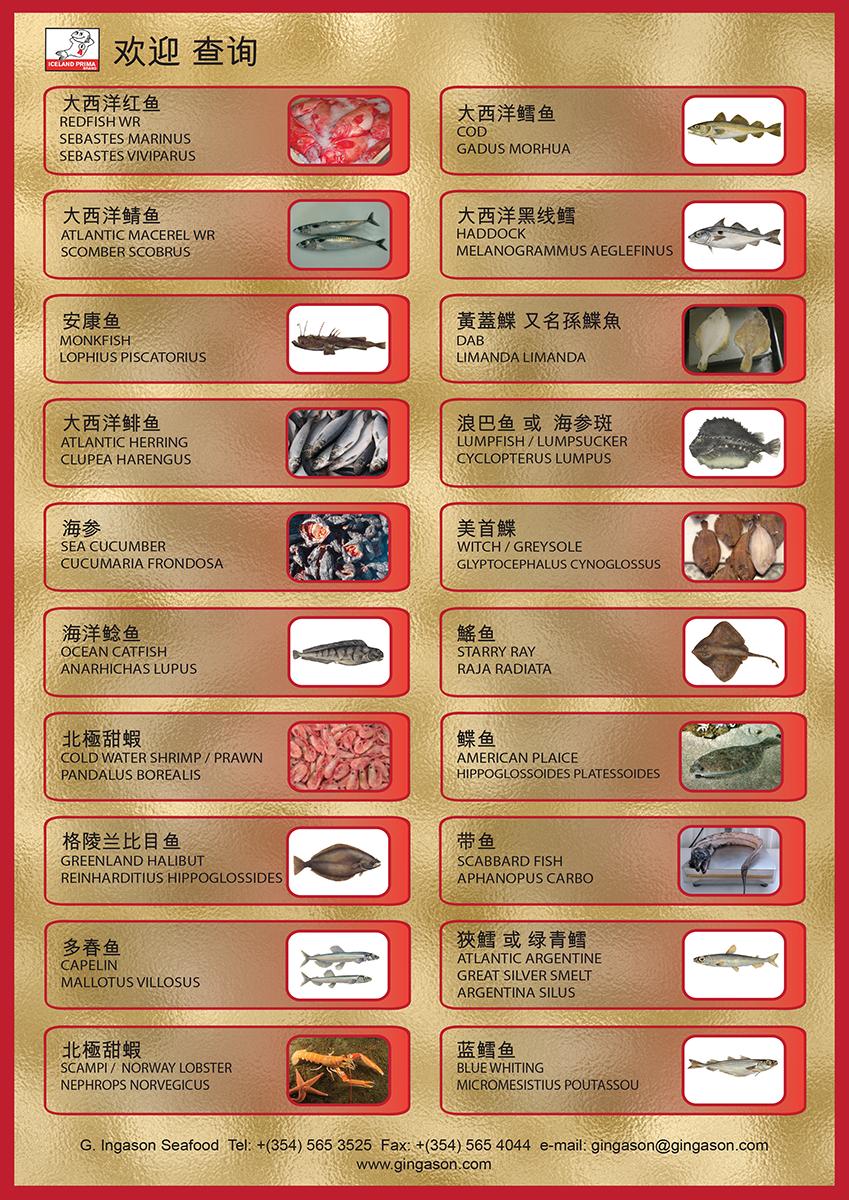 G.INGASON CHINA Productlist