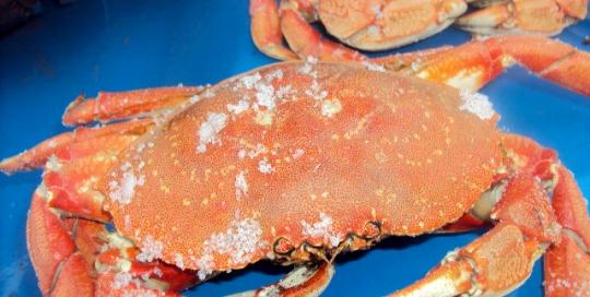 Rocky crab