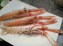 lobster_belly