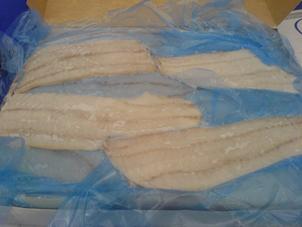 Seafrozen Saithe Fillets
