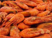 frozen-+shrimp_540