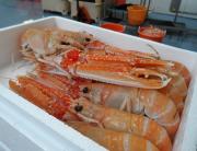 Neprops Norvegicus, G. Ingason Seafood