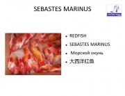 G. Ingason Seafood