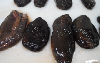 CAN  OFFFER  SEA CUCUMBER (CUCUMARIA FRONDOSA) NEW SEASON AND SOME FROM LAST